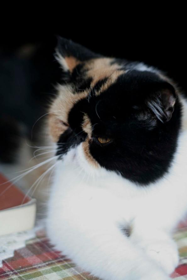 Cat1_W