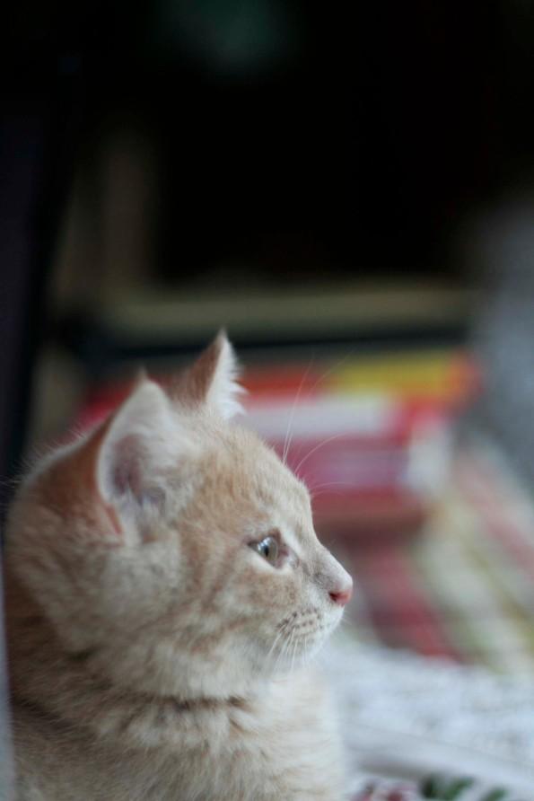 Cat5_W