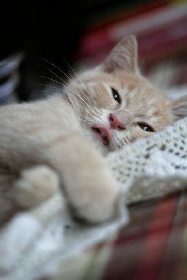 Cat7_W
